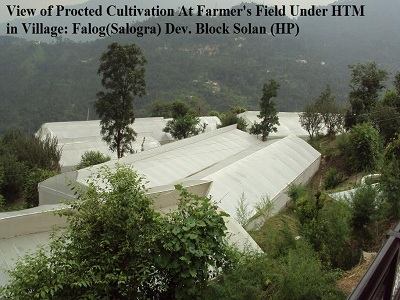 View of Protected Cultivation at Farmer's Field Under HTM in Village: Falog (Salogra) Dev. Block Solan (HP)