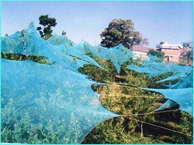 Use of Anti Hail Nets for crop protection, Himachal Pradesh